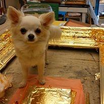 Hund Gobi aus der Vergolderei in Hamburg